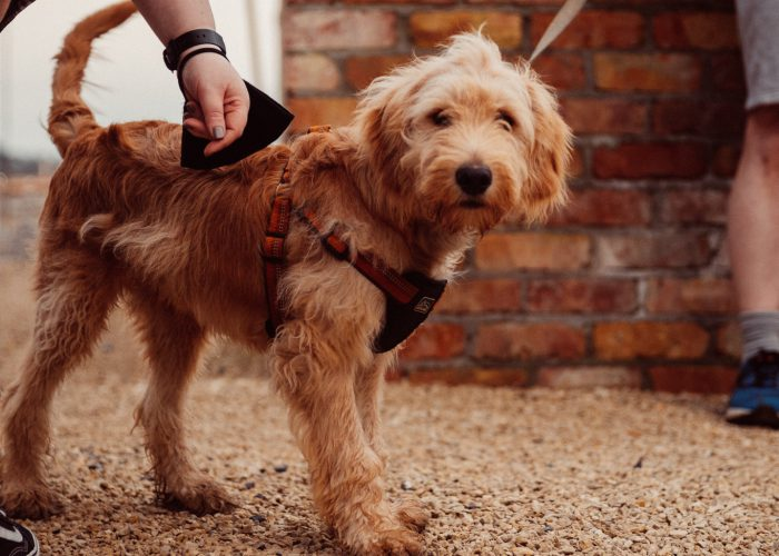 Dog Friendly Hotels Ireland, Dog Friendly Holidays, Hotels That Allow Dogs   Glasson